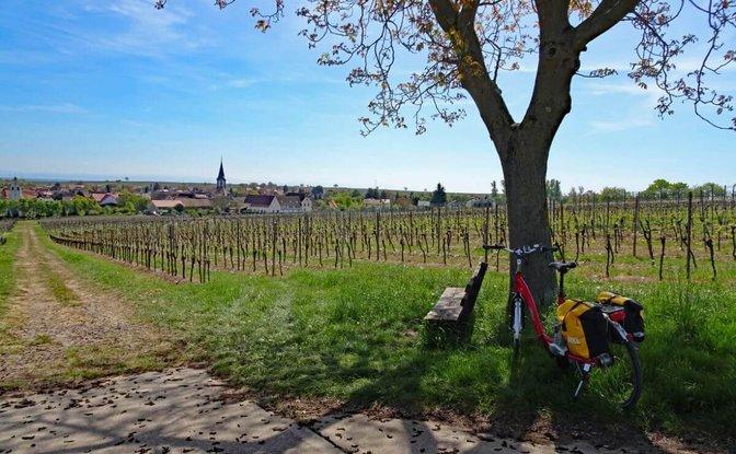 Neckar-Rhein Rad oder eBike