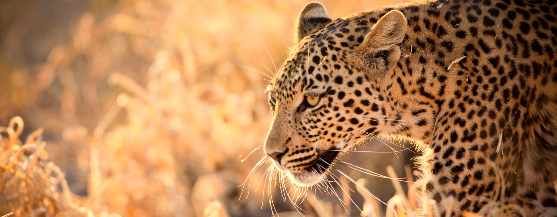 e-bike-reisen-sdafrika-Leopard3.jpg